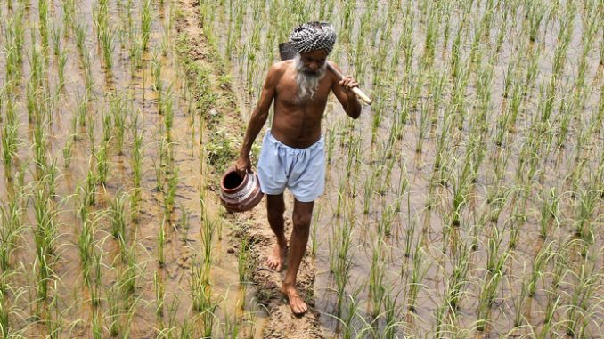 India blocks GMO seed trials to protect health of citizens and enviornment