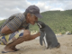 Penguin Swims 5,000 Miles Each Year To Visit Man Who Saved His Life