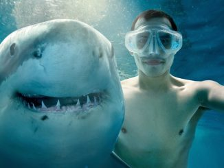 An Oregon man on honeymoon in Miami took a selfie with a shark – and didn't live to tell the tale