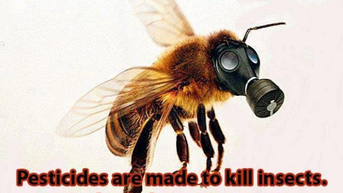 Monsanto's Big Secret: GMO Insect Planned To Replace Honey Bee