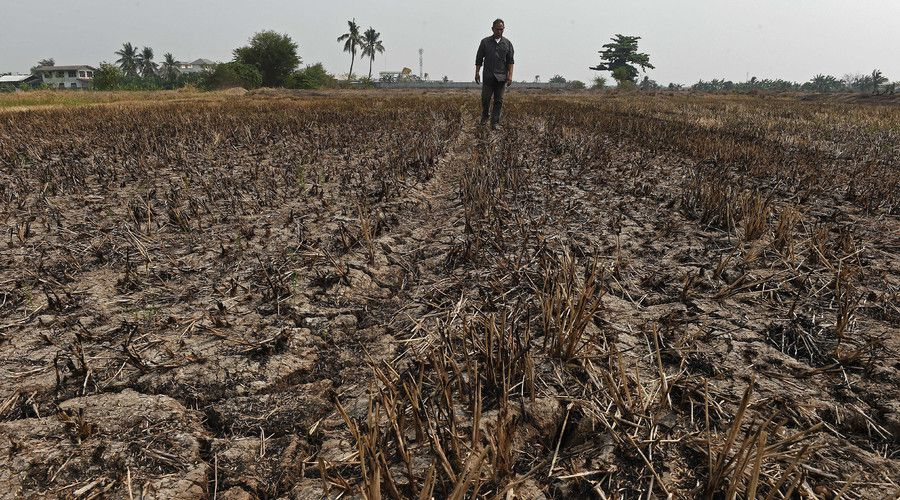 A farmer walking at his drought-hit rice field in Nonthaburi province outside Bangkok. © Christophe Archambault / AFP
