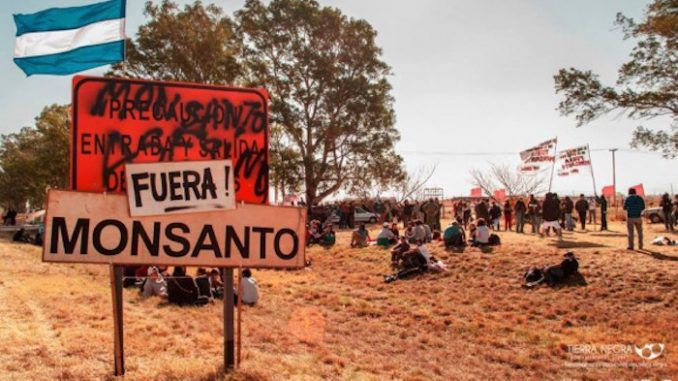 Monsanto taking Argentinian government to court over GM seed row