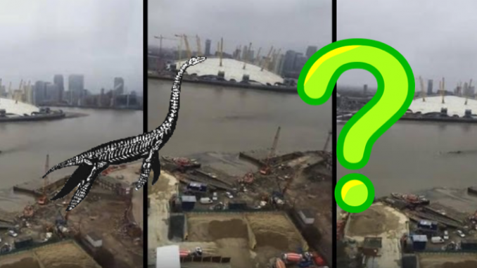 Mysterious creature filmed in the river Thames in London, UK
