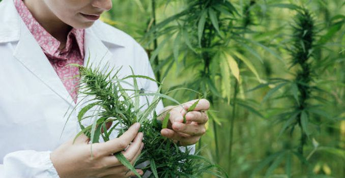 Marijuana patent approved by US government