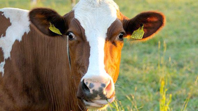 USDA say they will not compensate farmers whose cows were poisoned by Monsanto pesticides on nearby crops