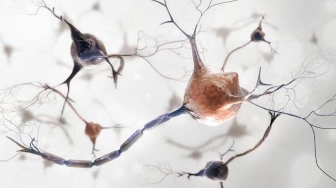 Scientists say Zika virus now causes nerve cell damage