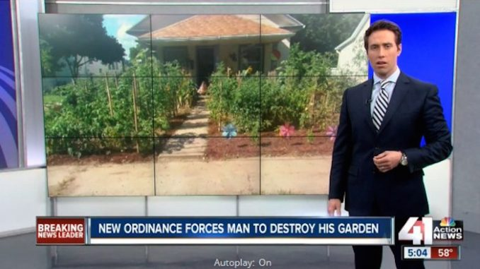 American family ordered to destroy vegetable patch in their garden, as city outlaws growing of vegetables