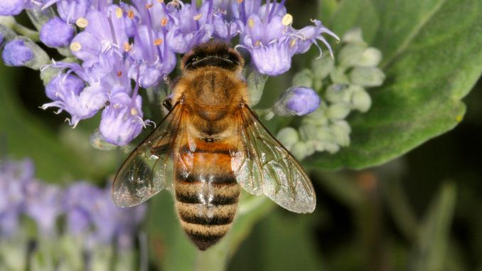 Bee-Killing Chemical To Be Phased Out By Major Pesticide Brand