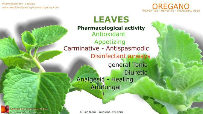 Here Are The Top 9 Benefits Of Oregano