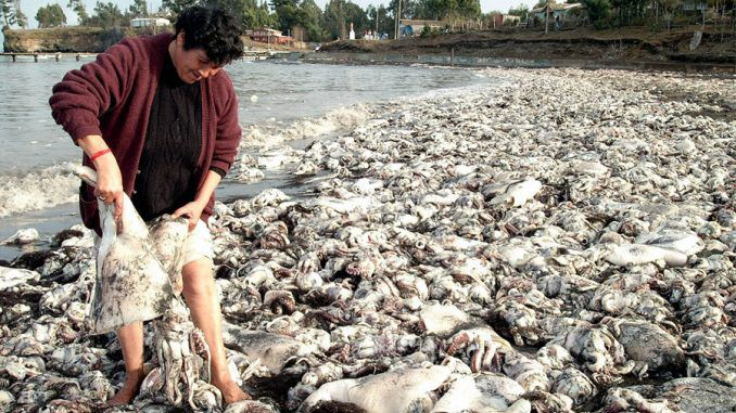 Thousands of dead creatures found dead on Chile's beaches