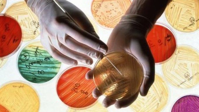 Scientists turn to holistic medicine as antibiotic resistance continues to rise