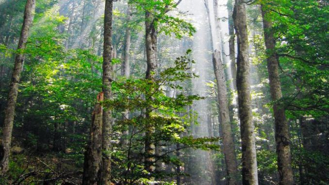 Norway Becomes The First Country To Commit To Zero Deforestation