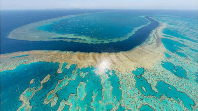 Scientists Warn Great Barrier Reef Is On Brink Of Collapse