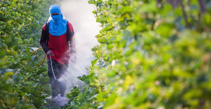 Top scientists confirm that Monsanto's herbicide causes cancer in humans