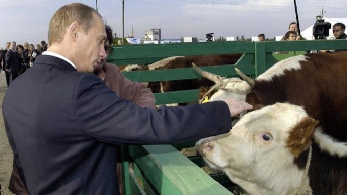 Putin permanently bans GMO animal feed in Russia