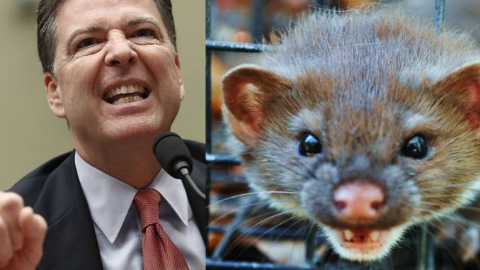 """FBI Director James Comey, defended his decision not to recommend the DOJ prosecuteHillary Clinton, and pleaded with lawmakers not to call him a """"weasel."""""""