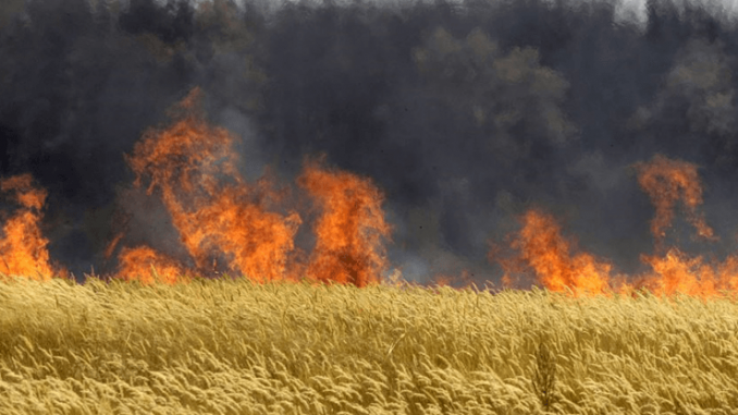 Hungary destroys 1,000 acres of GMO crops by burning them to the ground