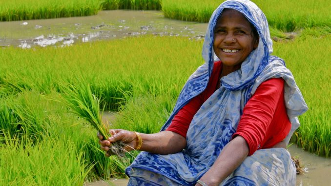 Indian rice farmers debunk the myth that GMOs are needed to feed the world