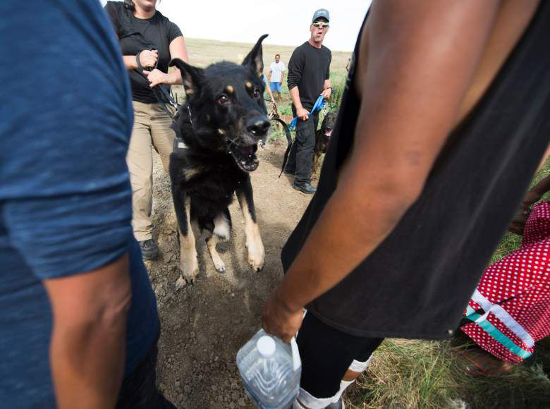 Attack dogs were set on protestors on Saturday.