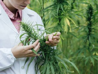 Australia Legalizes The Cultivation Of Medical Marijuana
