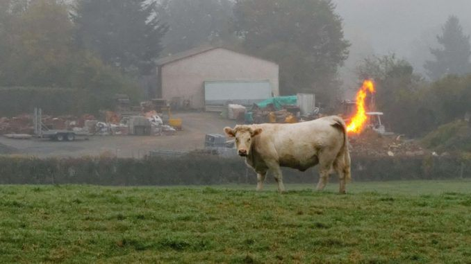 California to regulate cow farts in an attempt to combat global warming