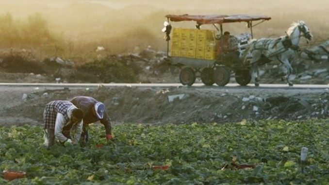 Israel sprays pesticides along Gaza border over Christmas period