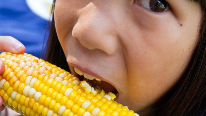 New report proves GM food is harmful to human health