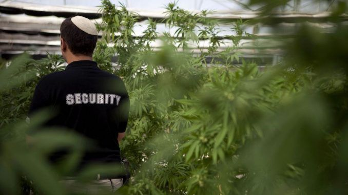 Israel to decriminalize cannabis use