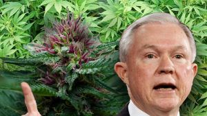 Attorney General Jeff Sessions said that if the states want to legalize marijuana then Congress should make it legal at the federal level.