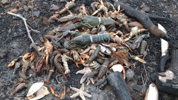1,000s Of Sea Creatures Mysteriously Wash Up Dead In Canada