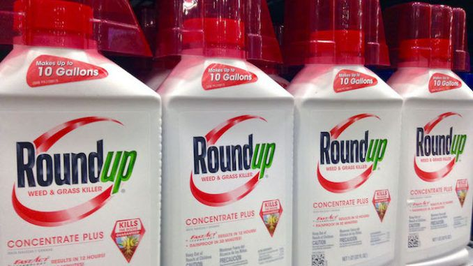 Monsanto weed-killer 'Roundup' labelled as cancer-causing in California