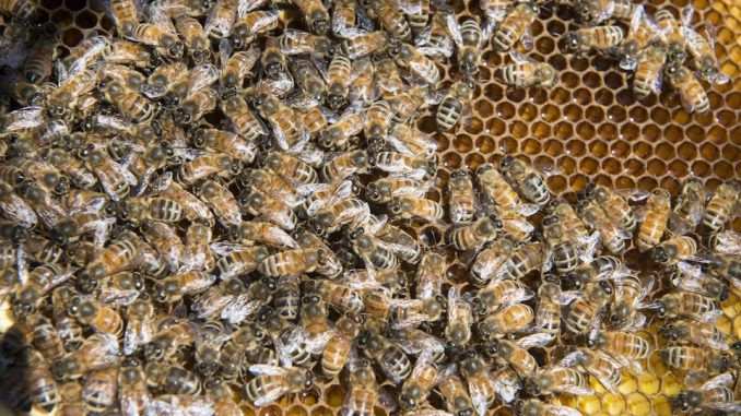 Thousands of dead bees wash ashore in Florida