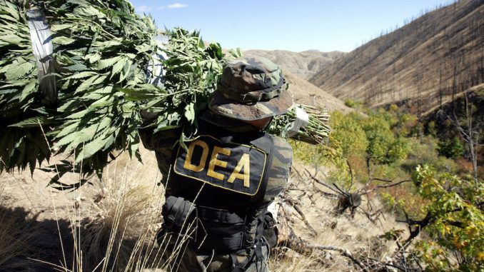DEA Insider claims that marijuana will always remain illegal due to its profitability