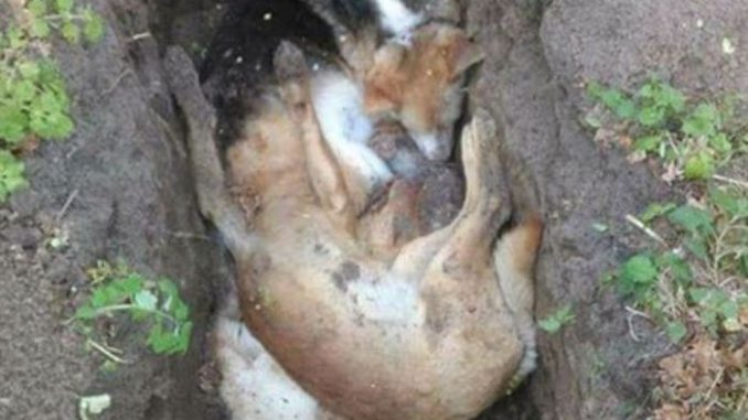 Ukraine slaughter thousands of homeless dogs and cats ahead of Eurovision song contest