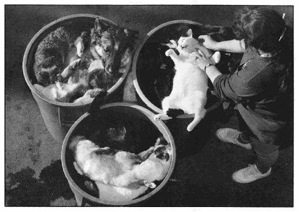 cats-dogs-food