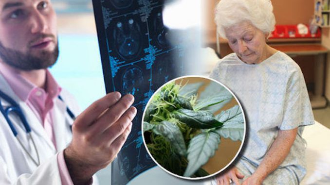 Cannabis reverses the aging process in the brain, according to a study that opens up more possibilities for the medicinal use of the plant.