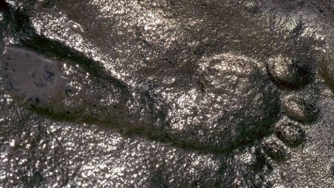 Giant human footprint thought to be 290 million years old baffles scientists
