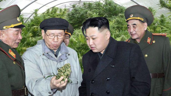 Kim Jong-un cultivating marijuana to use as fuel for military drones in North Korea
