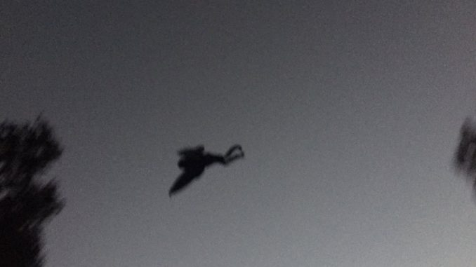 Mothman creature spotted over Chicago