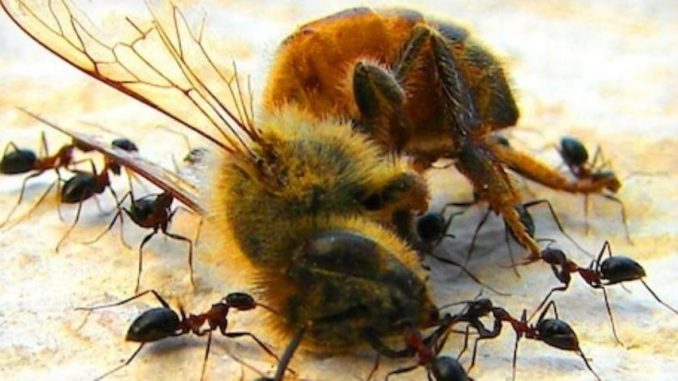 Bayer study reveals that their pesticides are killing the world's bee population