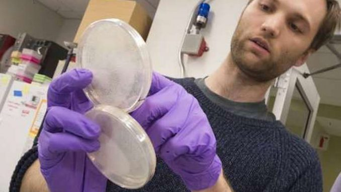 Scientists build DNA from scratch