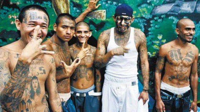California to pay murdering gang members $1000 to stop killing people