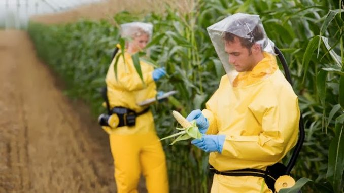Monsanto illegally used carcinogenic chemicals for 8 years, court documents reveal