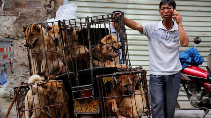 """The owner and four staff of China's most popular dog meat restaurant have fallen victim to a full on attack by """"25 Alsatians"""" that were being """"fattened in cages"""" behind the restaurant."""