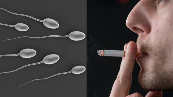Canadian researchers say smoking marijuana makes men infertile