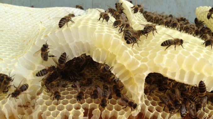 Deadly pesticides found in two-thirds of worlds honey