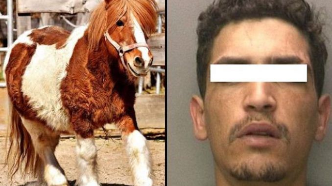 Syrian immigrant caught raping pony in front of children at a German zoo