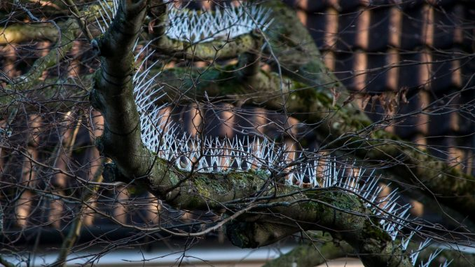 Outrage As Wealthy UK Residents Install Anti-Bird Spikes On
