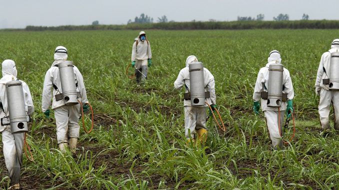 Monsanto Roundup weedkiller found to destroy Microbiome in humans and soil