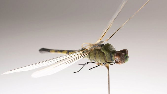 Government have been using insect drones since 1970's